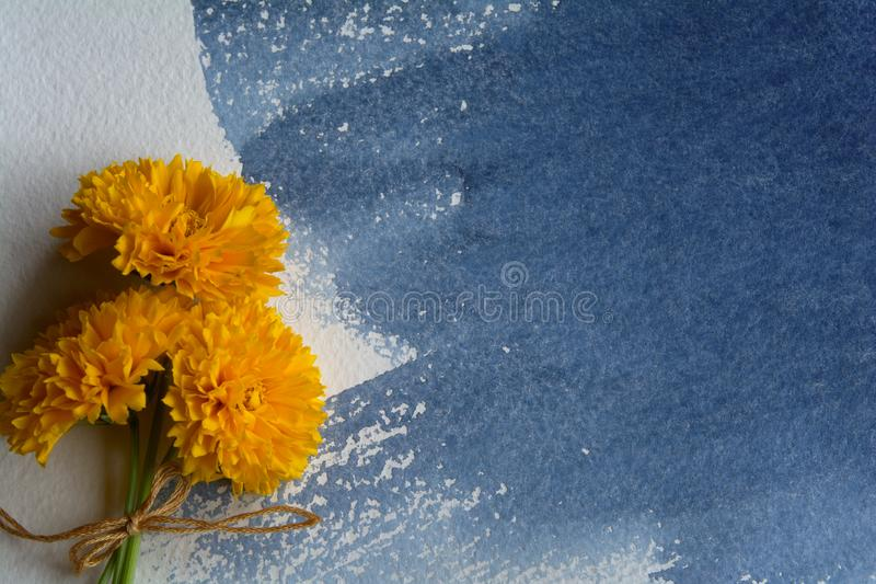 A bunch of yellow Coreopsis flowers on a sheet of watercolor paper with an indigo-colored watercolor stain stock photo