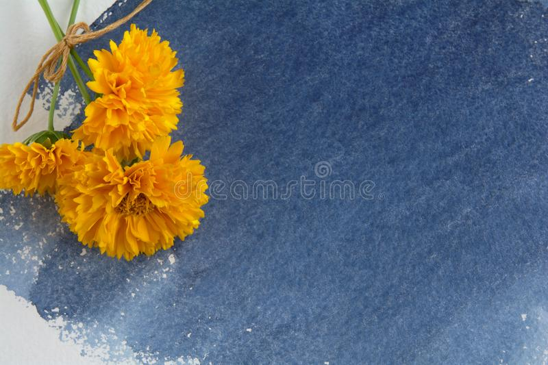 A bunch of yellow Coreopsis flowers on a sheet of watercolor paper with an indigo-colored watercolor stain royalty free stock photos