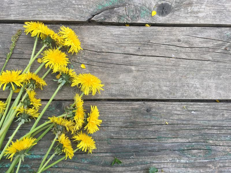 A bunch of yellow dandelions on a old dark wooden background with empty space for text royalty free stock photo