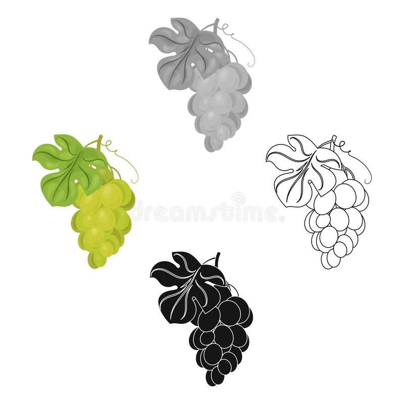 Bunch of yellow grapes icon in cartoon,black style isolated on white background. Wine production symbol stock vector. Bunch of yellow grapes icon in cartoon stock illustration