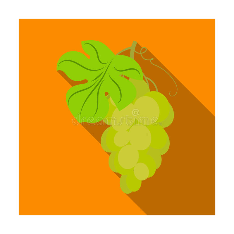 Bunch of yellow grapes icon in flat style isolated on white background. Wine production symbol. Bunch of yellow grapes icon in flat design isolated on white vector illustration