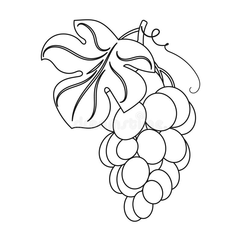Bunch of yellow grapes icon in outline style isolated on white background. Wine production symbol. Bunch of yellow grapes icon in outline design isolated on stock illustration