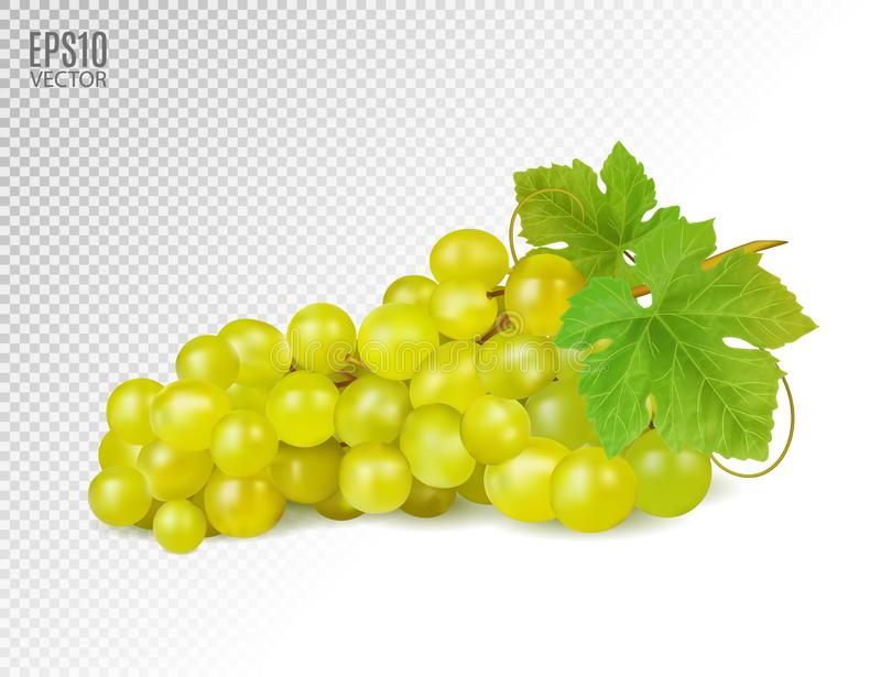 Bunch of yellow or green grapes with vine leaves isolated on transparent background. Cluster of grape. Realistic, fresh. Natural food, dessert. 3d vector vector illustration