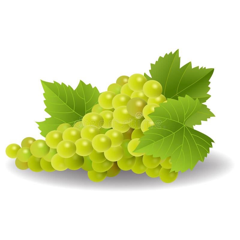 Bunch of yellow or green grapes with vine leaves. Isolated on white background stock illustration