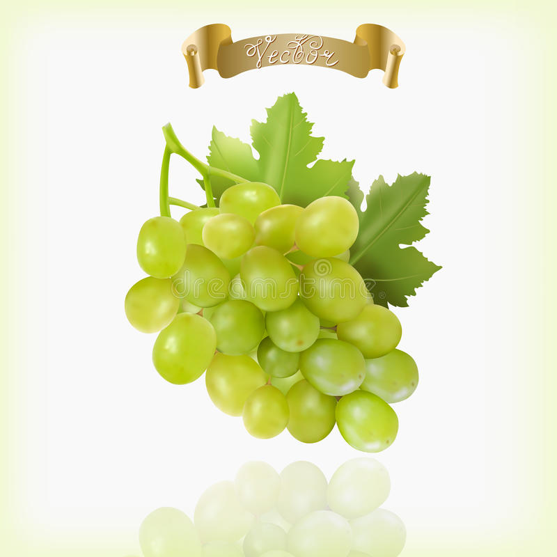Bunch of yellow or green grapes with vine leaves isolated on white background. Cluster of grape. Realistic, fresh. Natural food, dessert. 3d vector vector illustration