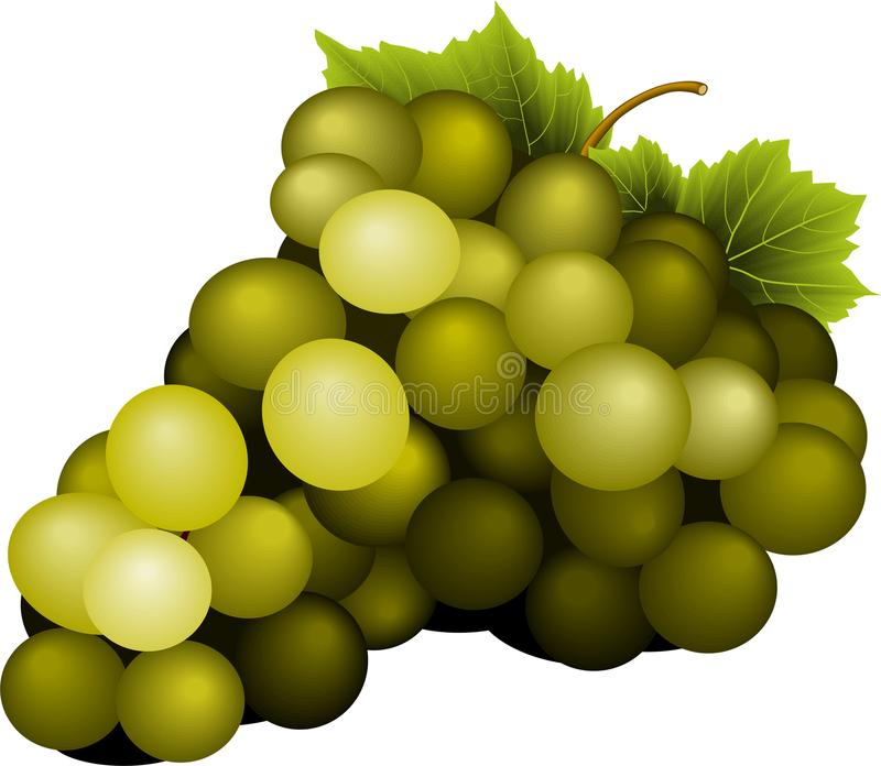 Bunch of yellow wine grapes with leaves. Vector isolated stock illustration