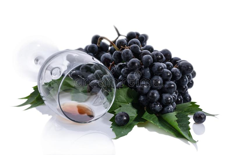 Bunches of black grapes with leaves and a wine glass on a white background stock image