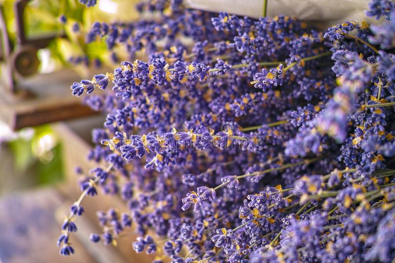 Bunches of dried colorful aromatic French lavender flowers from Provence close up royalty free stock photography