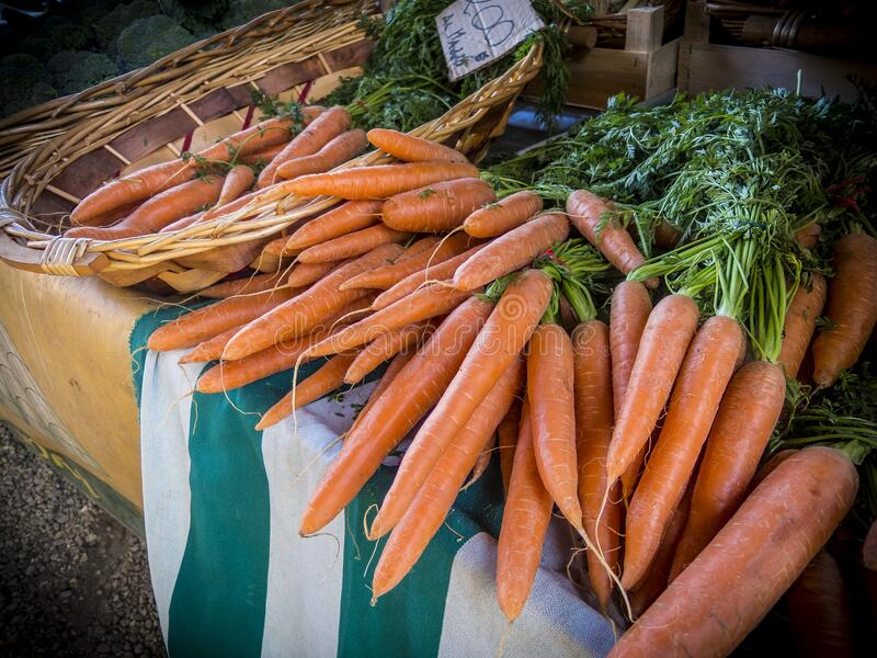 Bunches of fresh carrots royalty free stock photo