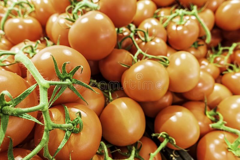 Bunches of fresh tomatoes on display for sale in a local green grocer royalty free stock photo