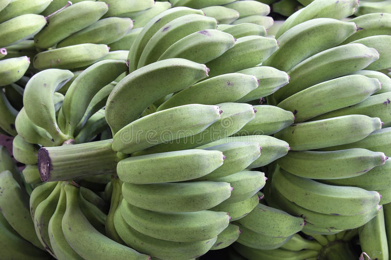 Bunches Of Green Bananas On Stalk Stock Images