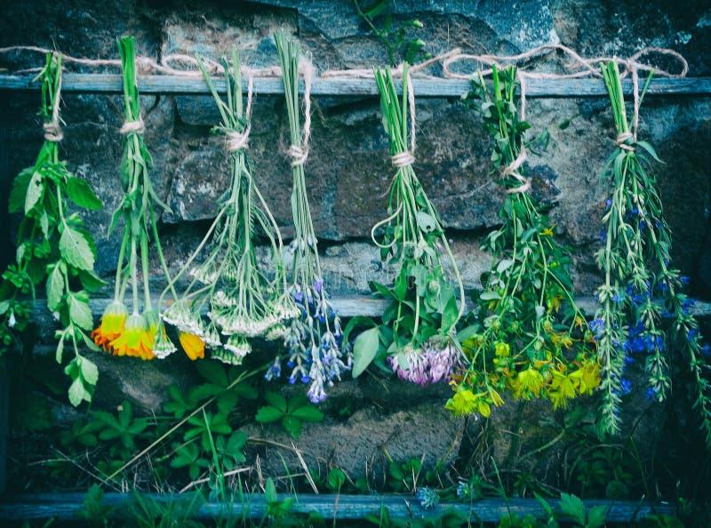 Bunches of healing herbs. Calendula stock photography