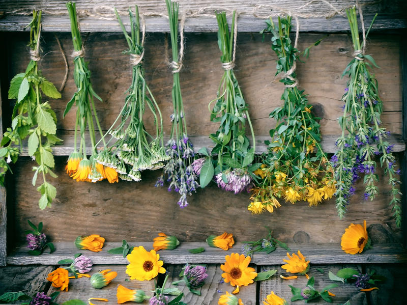 Bunches of healing herbs. Herbal medicine royalty free stock image