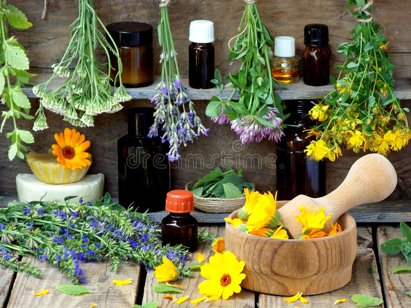 Bunches of healing herbs - mint, yarrow, lavender, clover, hyssop, milfoil, mortar with flowers of calendula and bottles,. Herbal medicine stock image