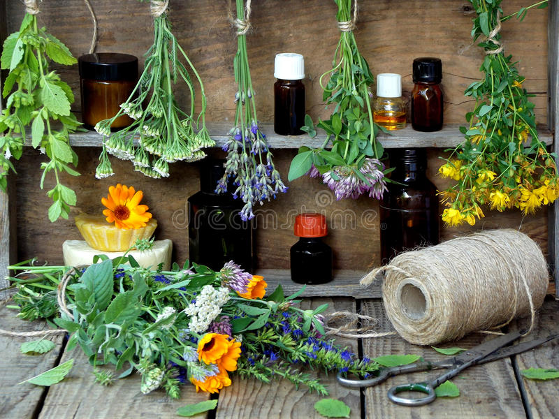 Bunches of healing herbs - mint, yarrow, lavender, clover, hyssop, milfoil, mortar with flowers of calendula and bottles, royalty free stock image