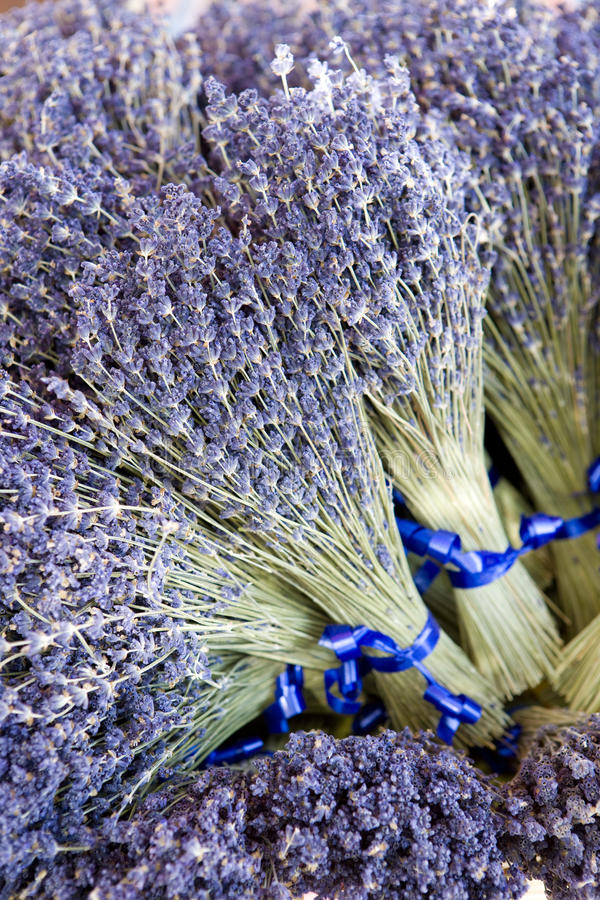 Bunches Of Lavenders Royalty Free Stock Photos
