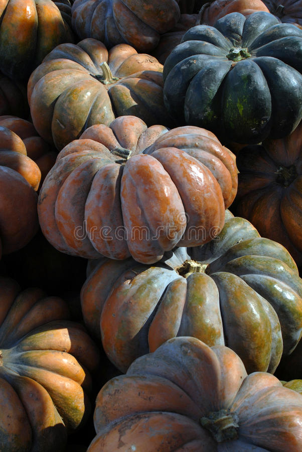 Bunches Of Multicolored Pumpkins Stock Images
