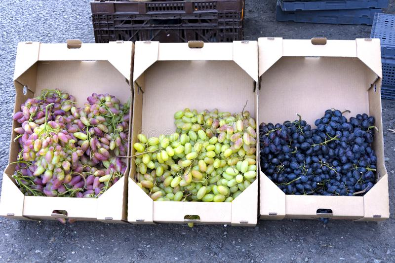 Bunches of ripe green grapes for cooking wine and food are stacked in cardboard square boxes for transportation. Close-up stock images