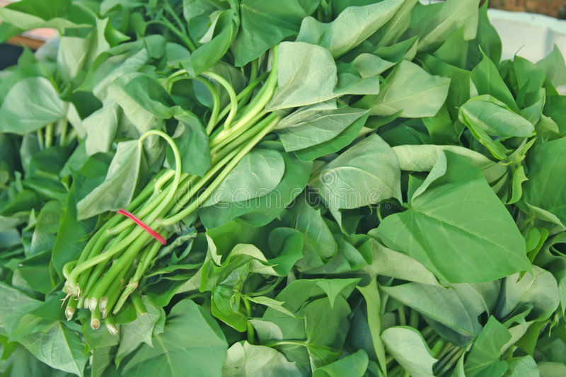 Download Bunches of spinach stock image. Image of foods, diet, vitamins - 4932701