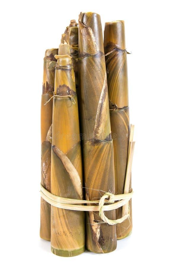 Bundel van gekookt bamboespruiten die op witte achtergrond worden geïsoleerd stock afbeeldingen
