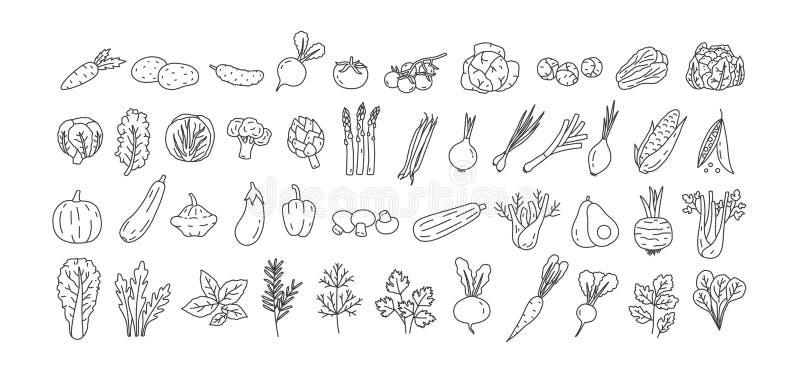 Bundel van groenten, gecultiveerde wortelsgewassen, salades, kruidige die kruiden met contourlijnen op witte achtergrond worden g royalty-vrije illustratie
