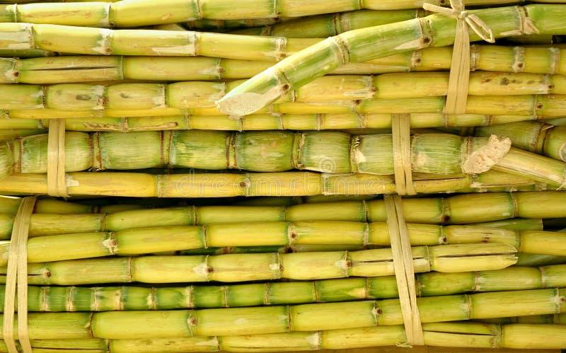 Bundels van Sugar Cane royalty-vrije stock foto's
