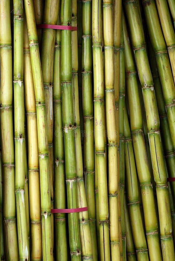 Bundels van Vers Sugar Cane royalty-vrije stock foto's