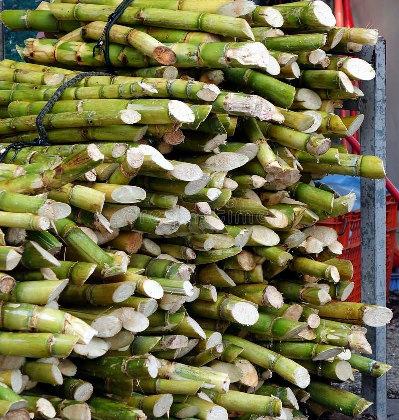 Bundels van Vers Sugar Cane royalty-vrije stock fotografie