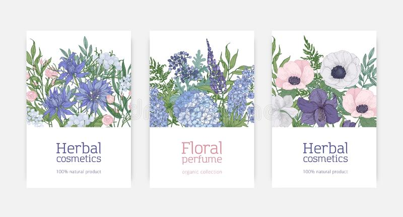 Bundle of card or flyer templates for herbal cosmetics and natural floral perfume advertisement decorated by blooming. Blue, pink and purple flowers and royalty free illustration