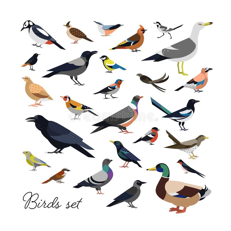 Bundle of city and wild forest birds drawn in modern geometric flat style, side view. Set of colorful cartoon avians or. Birdies isolated on white background vector illustration