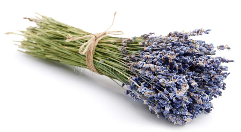 Download Bundle of dried lavender stock photo. Image of mountain - 14380196