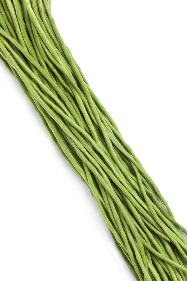 Bundle of fresh Snake beans. Bundle of fresh Chinese long beans on white background stock images