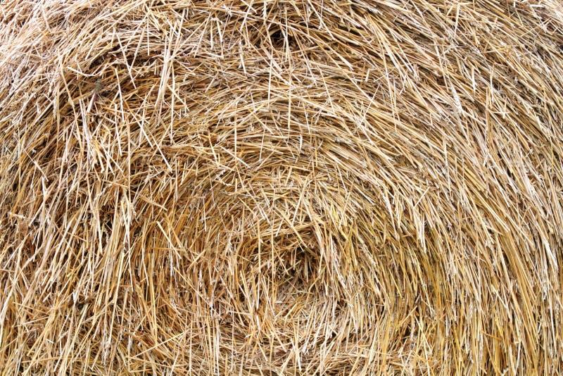 Bundle of hay stock image