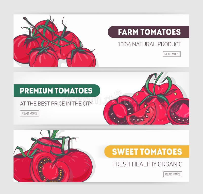 Bundle of horizontal web banner templates with sliced and whole red tomatoes and place for text. Modern vector. Illustration for premium farm vegetables or vector illustration