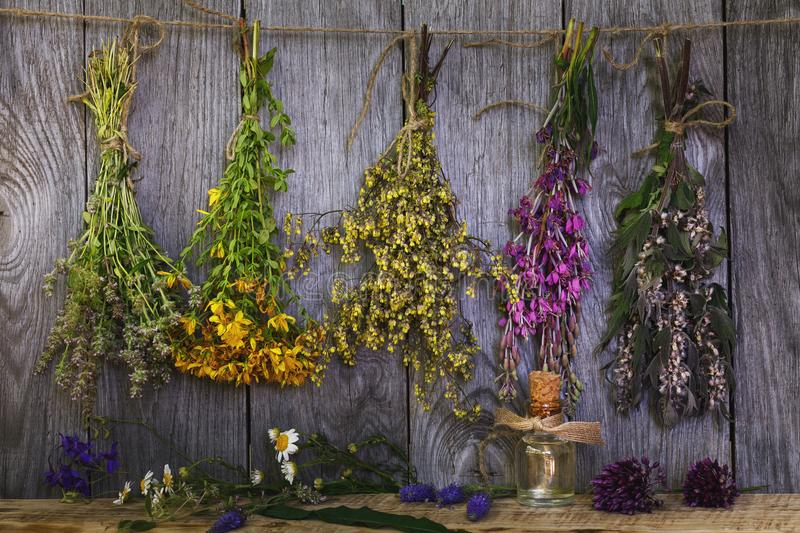 Bundle of plants in the drying process stock photography