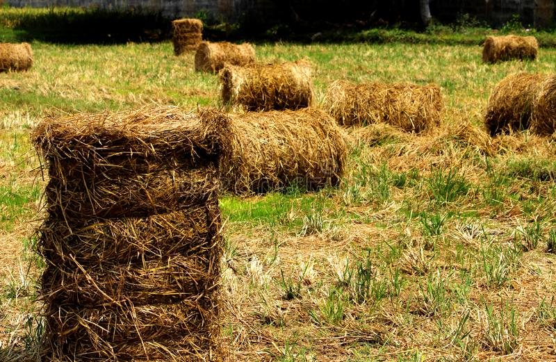Bundle of straw stock images