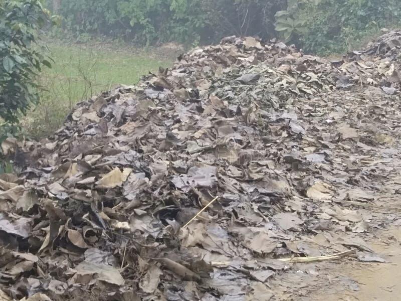 Bundle of Teak leafs (Saaguan ke patte ka dher) stockfotografie