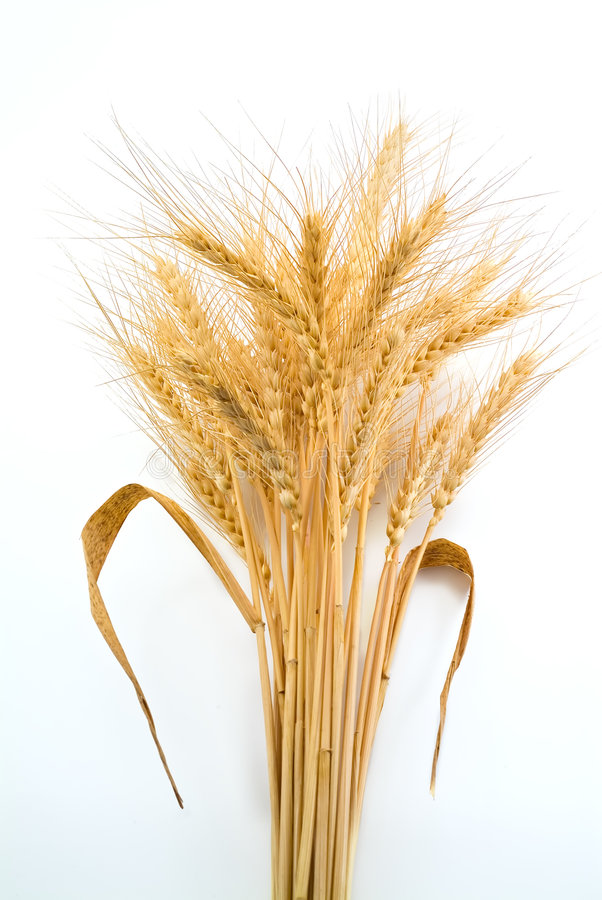Bundle of Wheat royalty free stock image