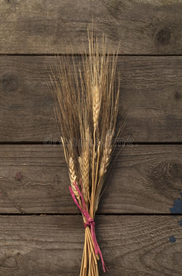 Bundle of wheat stock photography