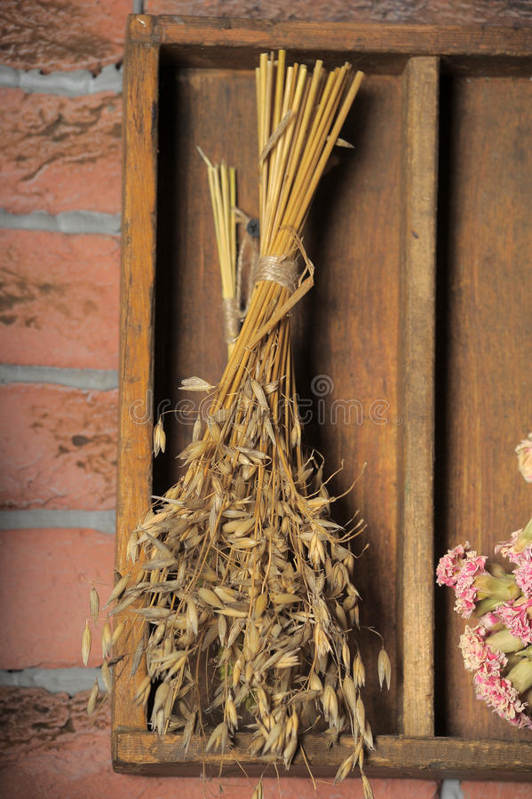 Bundles of dried plants royalty free stock image