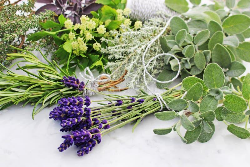 Bundles of fresh herbs royalty free stock images