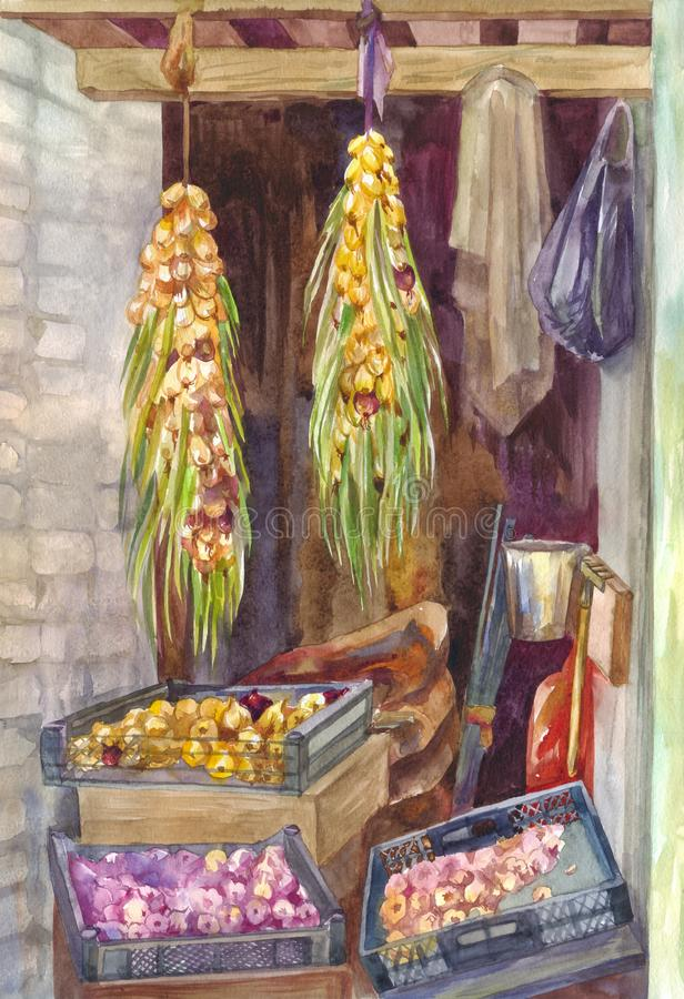 Bundles of onions in the form of braids dry in the hallway or pantry. Harvesting garlic for the winter. Autumn watercolor painting stock photo