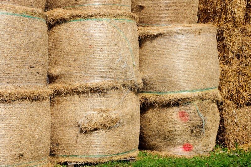 Download Bundles piled stock photo. Image of gathering, grass - 21339862