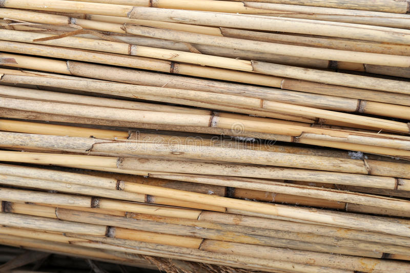 Bundles of reed. Reed / environmentally friendly construction materials royalty free stock image