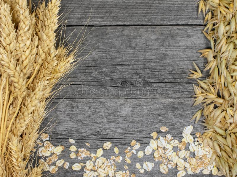 Bundles of wheat and oat spikelets. stock images