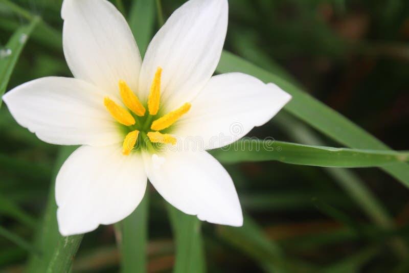 Bunga arkivbilder
