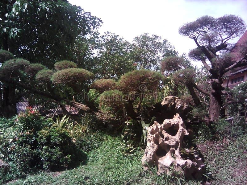 Bunga στοκ φωτογραφία με δικαίωμα ελεύθερης χρήσης