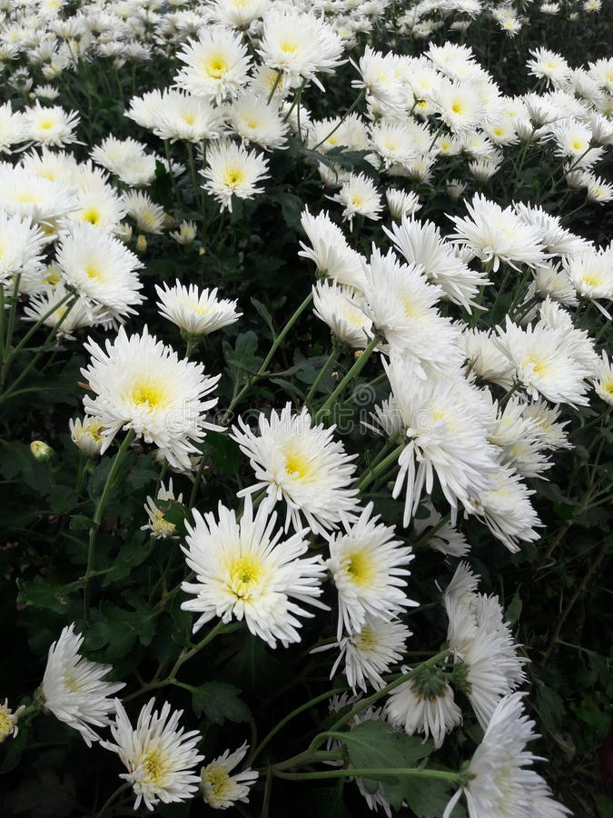 Bunga de Kebun imágenes de archivo libres de regalías