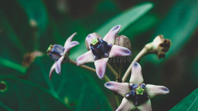 Bunga kecil mekar di taman 免版税图库摄影