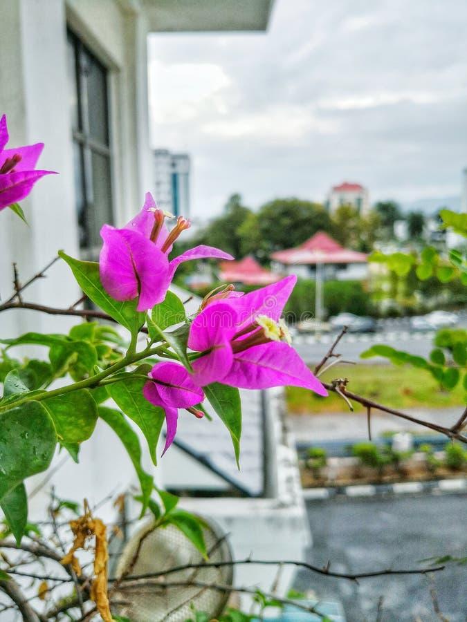 Bunga Kertas stockfotografie